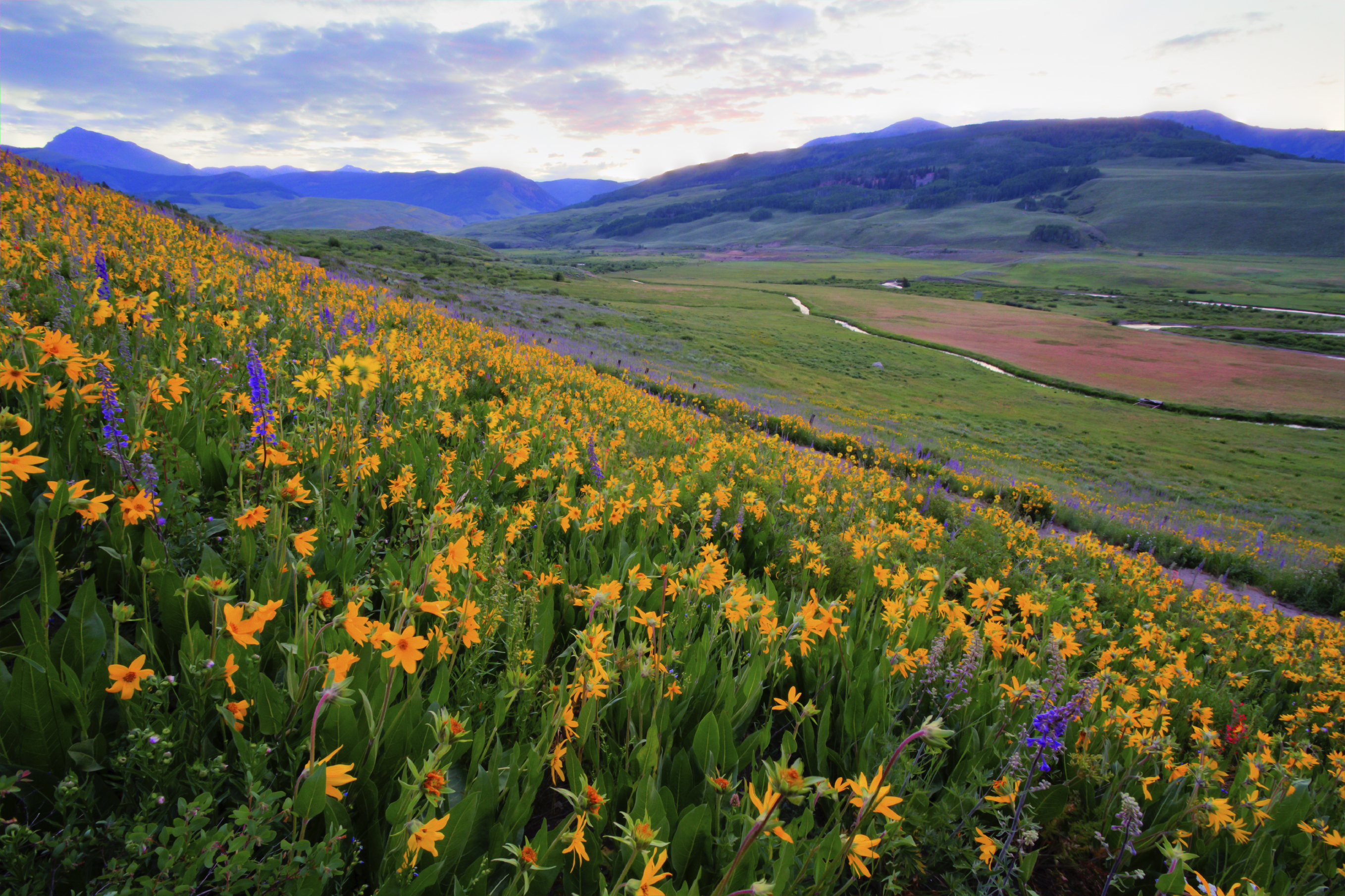 alpine wildflowers and wildlife crested butte reefs to rockies