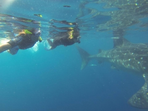 Swimming with whale sharks - Yucatan Peninsula, Mexico