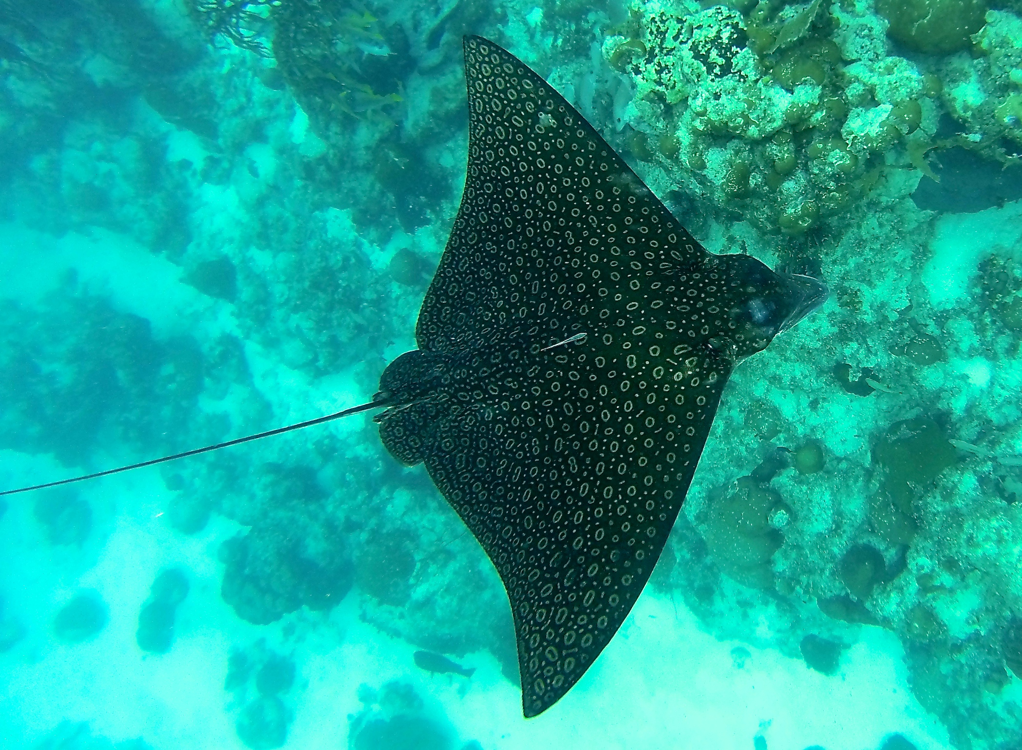 Ranks In Marine >> Belize Trip Report: Snorkeling at Hol Chan and Shark Ray ...
