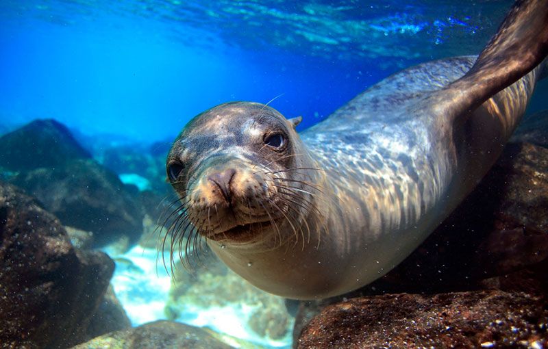 Galapagos Discovery by Yacht | Reefs to Rockies