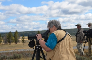 Wildlife viewing - Hayden Valley, Yellowstone National Park