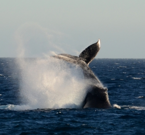 guided whale watching tours in Mexico Reefs to Rockies