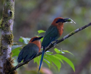 Birding in Ecuador's cloud forest