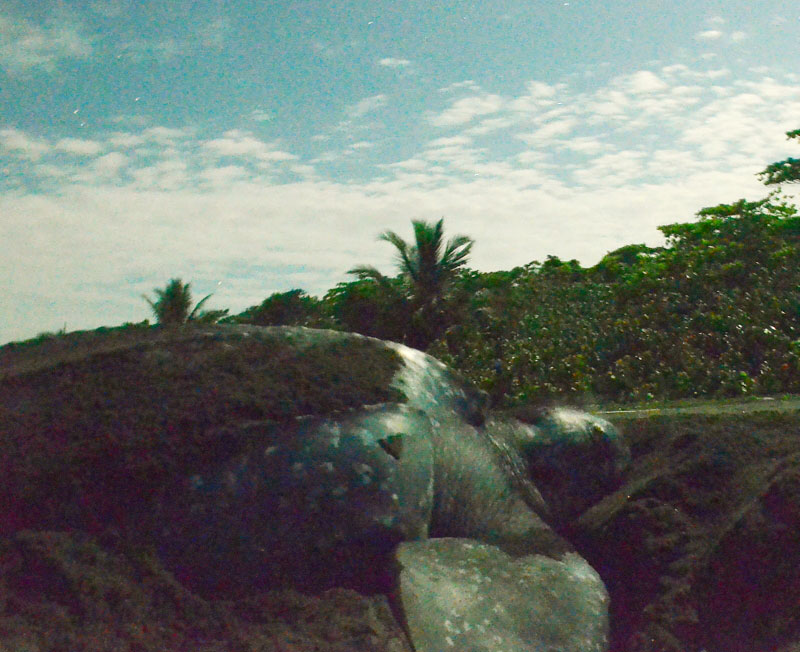 leatherback sea turtle Costa Rica
