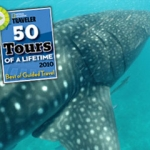 mozambique-sea-whale-shark