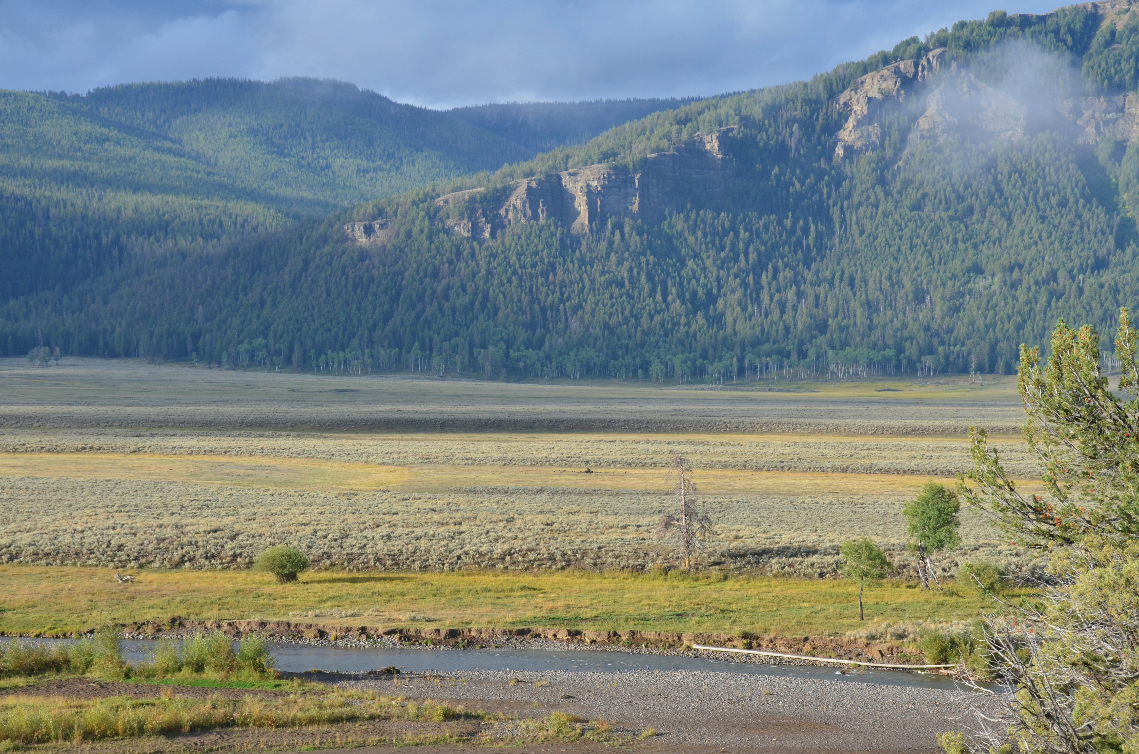 Yellowstone Wolves And Changing Landscapes Reefs To Rockies