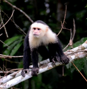 guided nature tours Panama