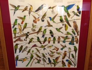 Hummingbird artwork on display in the lobby at Mashpi Lodge in Ecuador.