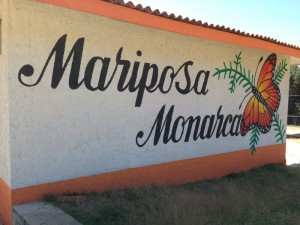El Capulin monarch butterfly sanctuary mexico eco tour