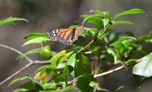El Capulin monarch butterfly sanctuary Mexico eco tour Reefs to Rockies