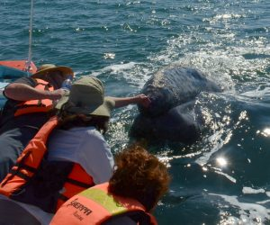 Gray whale guided tour Mexico