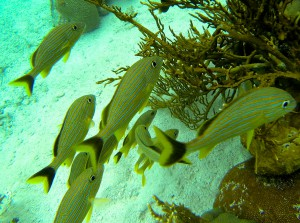 guided eco tours Belize Reefs to Rockies