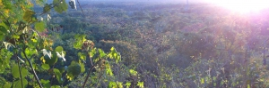 Reefs to Rockies guided tours Calakmul Mexico