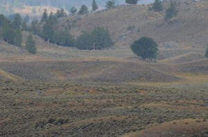 View of area where we observed seven members of Yellowstone's Junction Butte wolf pack.  There is one black wolf on the ridge in this photo.