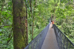 New suspension bridge at El Remanso Lodge - Osa Peninsula, Costa Rica.