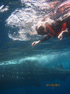 swimming with whale sharks mexico eco tour