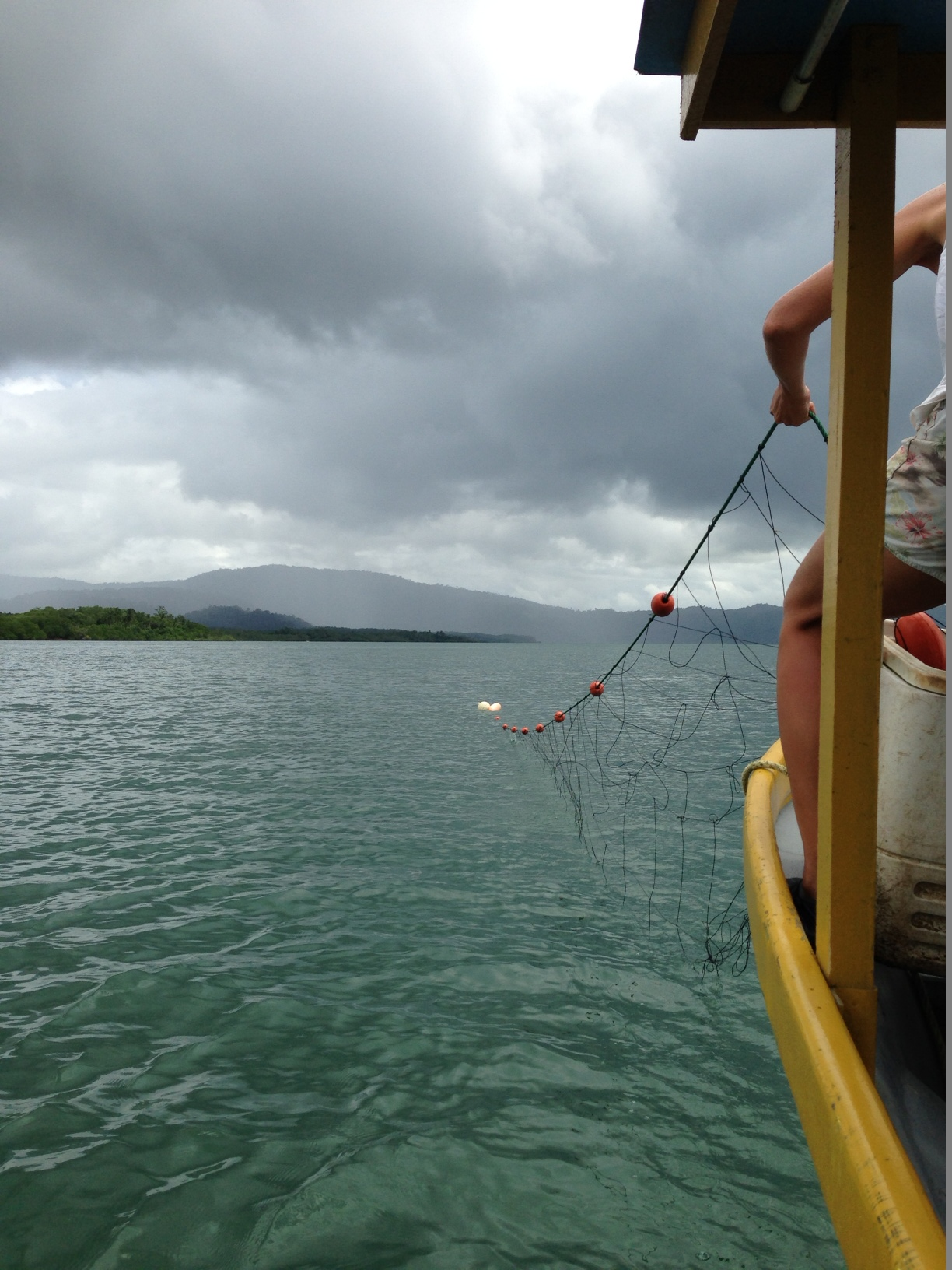 "Setting the net for WIDECAST's ""In the Water"" monitoring project."